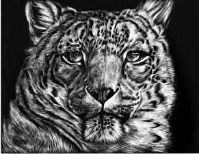 Обои Большие кошки Барсы Рисованные Морда Взгляд Черно белое Животные фото