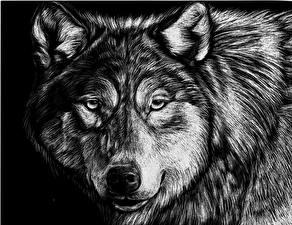 Обои Волки Рисованные Морда Взгляд Черно белое Животные фото