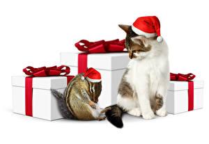 Фотография Рождество Кошки Бурундуки Белый фон Вдвоем Шапки Подарки Животные