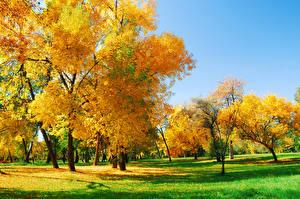 Обои Осень Луга Деревья Трава Природа фото