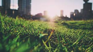 Обои Крупным планом Парки Трава Природа Города фото