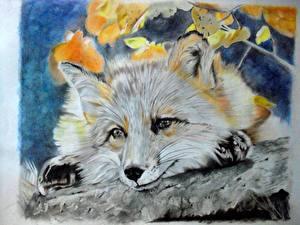 Обои Лисы Рисованные Морда Взгляд Животные фото
