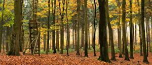 Обои Леса Осень Ствол дерева Листья Деревья Природа фото