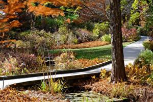 Обои США Парки Мосты Осень Ствол дерева Longwood Gardens Природа фото