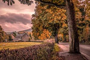 Картинка Англия Осенние Дома Деревья Bamford Природа
