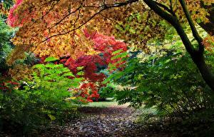 Обои Великобритания Парки Осень Ветки Westonbirt Arboretum Природа фото