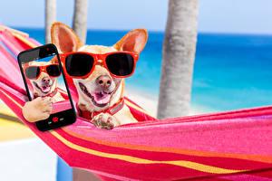 Фотография Собака Курорты Чихуахуа Очках Телефона Смартфон Гамаке Селфи Животные