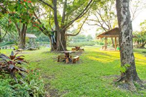 Картинка Таиланд Парки Ствол дерева Скамейка Дерево Suan Luang Природа