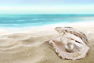 Обои Ракушки Море Жемчуг Пляж Песок Природа фото