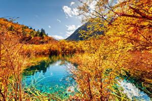 Обои Китай Парки Осень Озеро Пейзаж Цзючжайгоу парк Кустов Valley