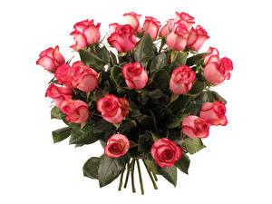 Обои Букеты Розы Розовый Белый фон Цветы фото