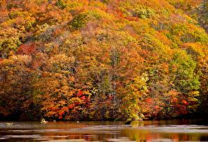 Обои Осень Леса Реки Природа фото