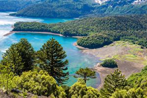 Картинки Чили Парки Побережье Леса Ель Conguillio National Park Природа