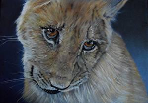 Обои Большие кошки Львы Детеныши Рисованные Глаза Морда Взгляд Усы Вибриссы Животные фото