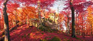 Обои Украина Осень Леса Камень Карпаты Ствол дерева Мох Листья