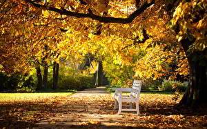 Фото Осень Парк Скамья Тротуар Природа