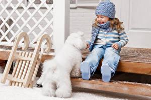 Картинка Собака Девочки Шапки Болоньез Смех Счастливая ребёнок Животные