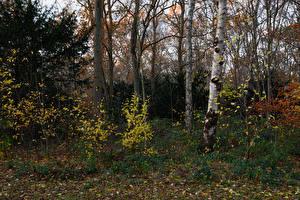Фотографии Нидерланды Парки Осень Деревья Кусты Листья Beeckestijn Природа
