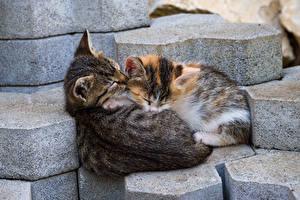 Картинка Коты Камни Двое Сон Тротуар Плитка Животные