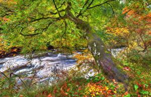 Фото Шотландия Реки Осень HDR Ствол дерева Листья Clyde Valley Woodlands Природа