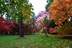 Картинки Великобритания Сады Осень Деревья Листья Westonbirt Arboretum Природа