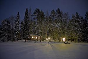 Фото Финляндия Зимние Снег Ель Ночные Природа