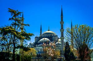 Обои Стамбул Турция Храмы Голубая мечеть Мечеть Деревья Купол Города