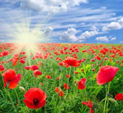 Картинки Поля Маки Небо Облачно Солнце Лучи света Цветы