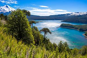 Обои Чили Парки Реки Горы Пейзаж Деревья Трава Conguillio National Park Природа