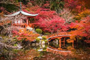 Картинка Япония Сады Пруд Мосты Осень Пагоды Киото Деревья Природа