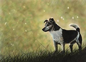 Картинки Собаки Рисованные Траве Животные
