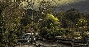 Фотографии Америка Парки Водопады Камень Техас Дерево Остин TX Bull Creek District Park Природа