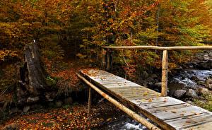 Фотография Времена года Осень Реки Камни Мосты Листья Природа