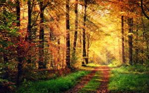 Обои Времена года Осень Леса Дороги Деревья Лучи света Природа фото