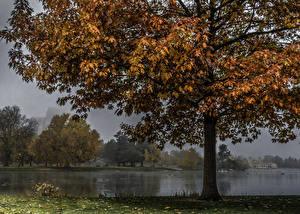 Обои США Парки Осень Пруд Деревья Листья Denver Природа