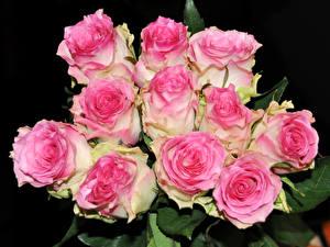 Обои Букеты Розы Крупным планом Розовый Черный фон Цветы фото