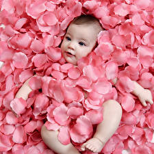 Фото Грудной ребёнок Лепестки Розовый Ребёнок