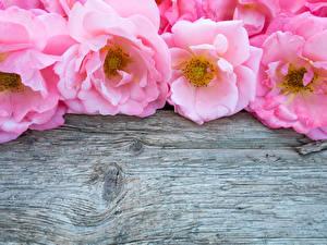 Обои Розы Крупным планом Розовый Доски Шаблон поздравительной открытки Цветы фото