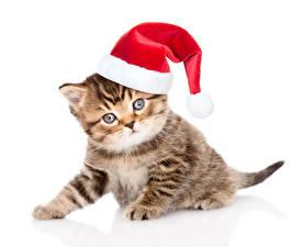 Обои Кошки Новый год Котята Шапки Взгляд Белый фон Животные фото