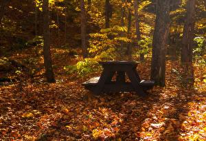 Фотографии Сезон года Осенние Парки Дерева Лист Ствол дерева Скамья Стол Природа