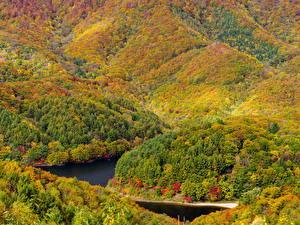 Фотографии Реки Леса Времена года Осень Природа