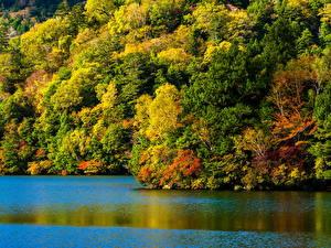 Картинки Осень Реки Леса Природа