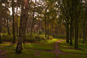 Обои Нидерланды Парки Осень Деревья Ствол дерева Тропа Huizermaat Huizen Природа