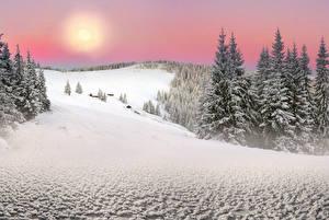 Фотографии Украина Зима Карпаты Закарпатье Снег Ель Солнце Природа