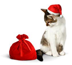 Картинки Рождество Коты Шапки Подарки Белый фон мешок Животные