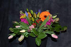 Фотография Букеты Тюльпаны Герберы Бутон Цветы