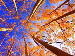 Фотография Небо Осенние Деревья Ствол дерева Вид снизу Природа