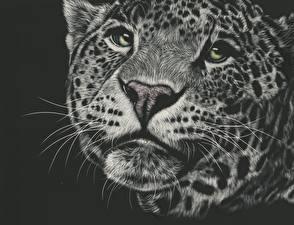 Обои Большие кошки Ягуары Рисованные Морда Усы Вибриссы Взгляд Черно белое Животные фото
