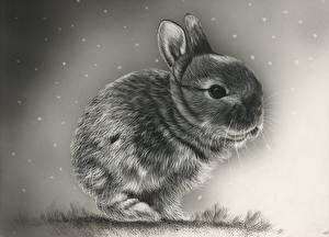 Картинка Зайцы Детеныши Рисованные Черно белые животное