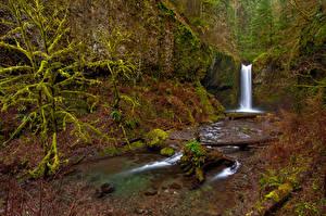 Фотографии Штаты Водопады Осенние Мох Ствол дерева Wiesendanger Falls Oregon Природа